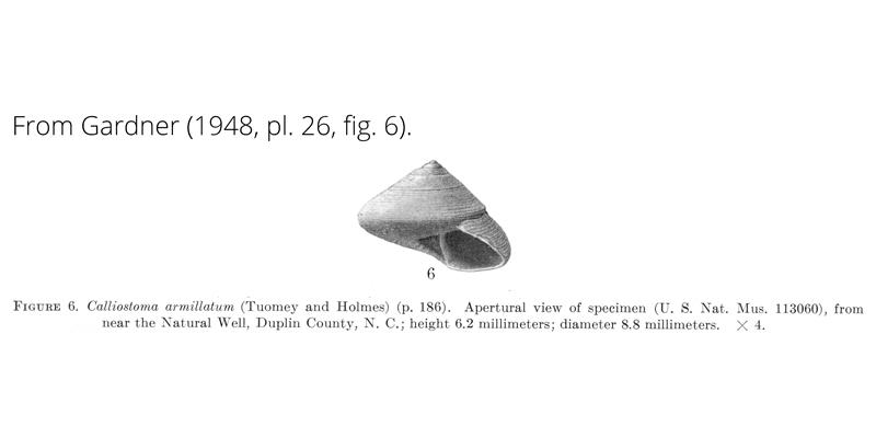 <i>Calliostoma armillatum</i> from Gardner (1948), pl. 26, fig. 6. USNM 113060. Near Natural Well, Duplin County, North Carolina.
