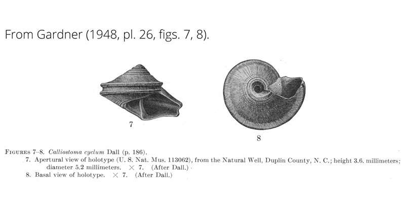 <i>Calliostoma cyclum</i> from Gardner (1948), pl. 26, figs. 7, 8. Holotype USNM 113062. Natural Well, Duplin County, North Carolina.
