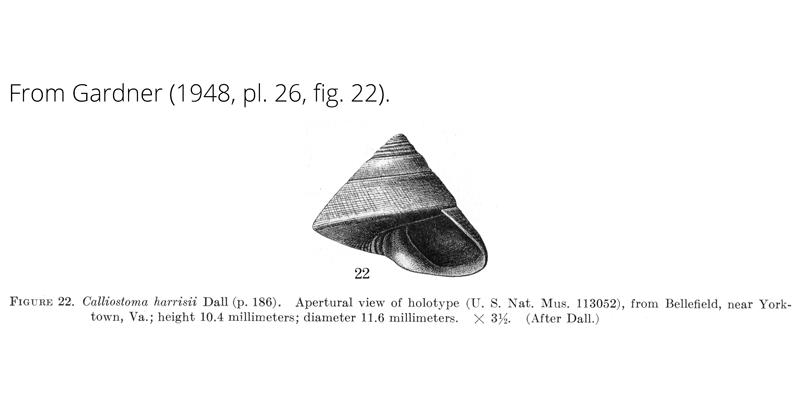 <i>Calliostoma harrisii</i> from Gardner (1948), pl. 26, fig. 22. Holotype USNM 113052. Bellefield, Virginia.