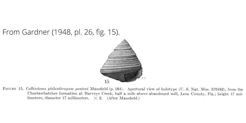 <i>Calliostoma philanthropum pontoni</i> from Garnder (1948), pl. 26, fig. 15. Holotype, USNM 370482. Choctawhatchee Formation, Leon County, Florida.