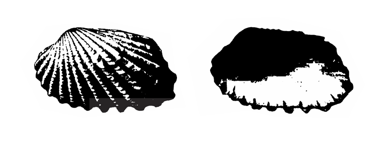 Specimen of <i>Carditamera apotegea</i> figured by Gardner (1926, pl. 17, fig. 1 and 2); 40.0 mm and 41.0 mm in length, respectively.