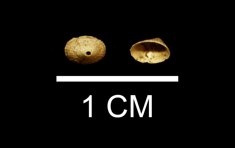 Diodora nucula from the Late Pliocene Duplin Fm. of Wayne County, Georgia (SDSM 112179).