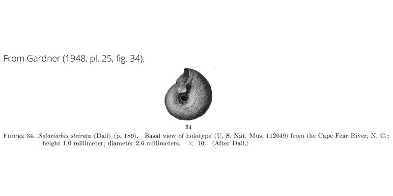 <i>Solariorbis steirata</i> from Gardner (1948), pl. 25, fig. 34. Holotype, USNM 112649. Cape Fear River, North Carolina.
