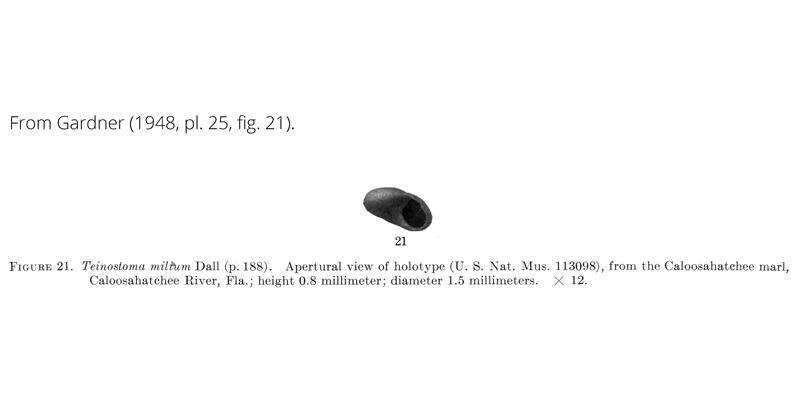 <i>Teinostoma milium</i> from Gardner (1948), pl. 25, fig. 21. Holotype, USNM 113098. Caloosahatchee Fm., Florida.