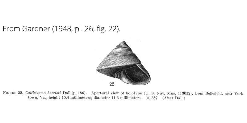 <i>Calliostoma harrisii</i> from Gardner (1948), pl. 26, fig. 22. Holotype USNM 113052. Bellefield, Virginia.