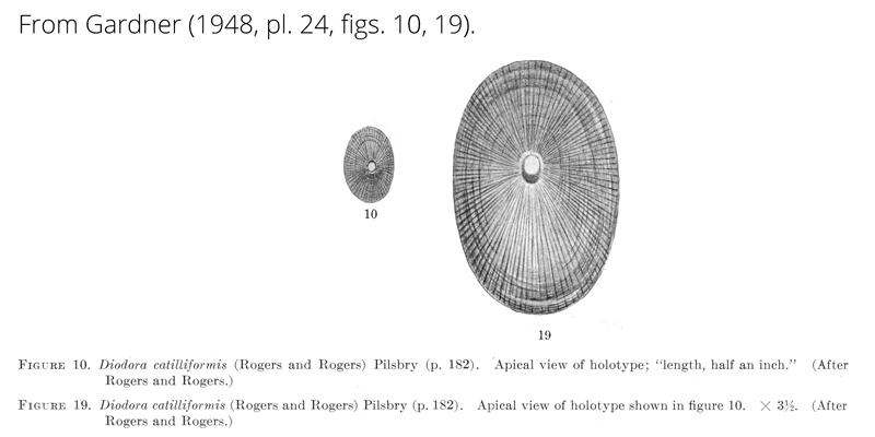 <i>Diodora catilliformis</i> from Gardner (1948), pl. 24, figs. 10, 19. Holotype.