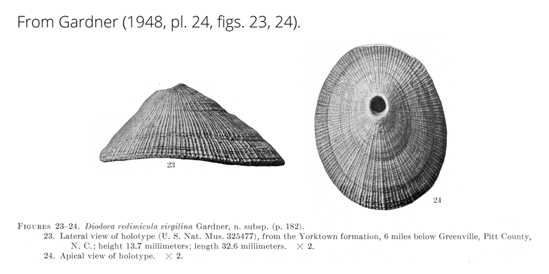 <i>Diodora redimicula virgilina</i> from Gardner (1948), pl. 24, figs. 23, 24. Holotype, USNM 325477. Yorktown Formation, Pitt County, North Carolina.