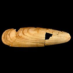Lithophaga