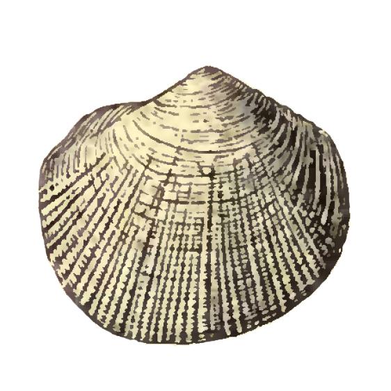 Specimen of <i>Parvilucina sphaeriolus</i> figured by Dall (1903, pl. 52, fig. 15); 4.25 mm in length.